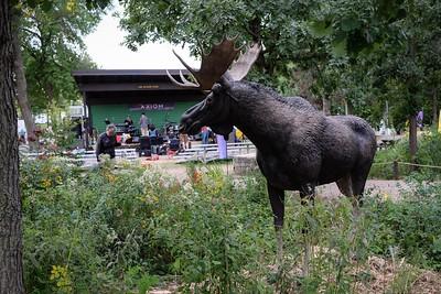 Moose, no squirrel