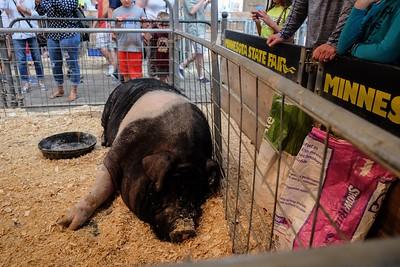 Butch; 1200 pounds