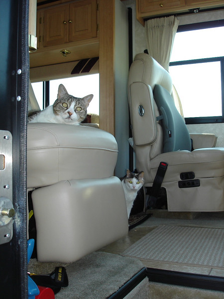 Cats in RV, ready to hit the road!