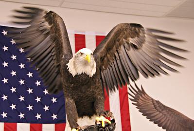 Nat'l Eagle Center, Wabasha  2009
