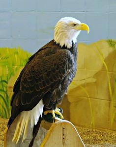 National Eagle Center - Wabasha, MN