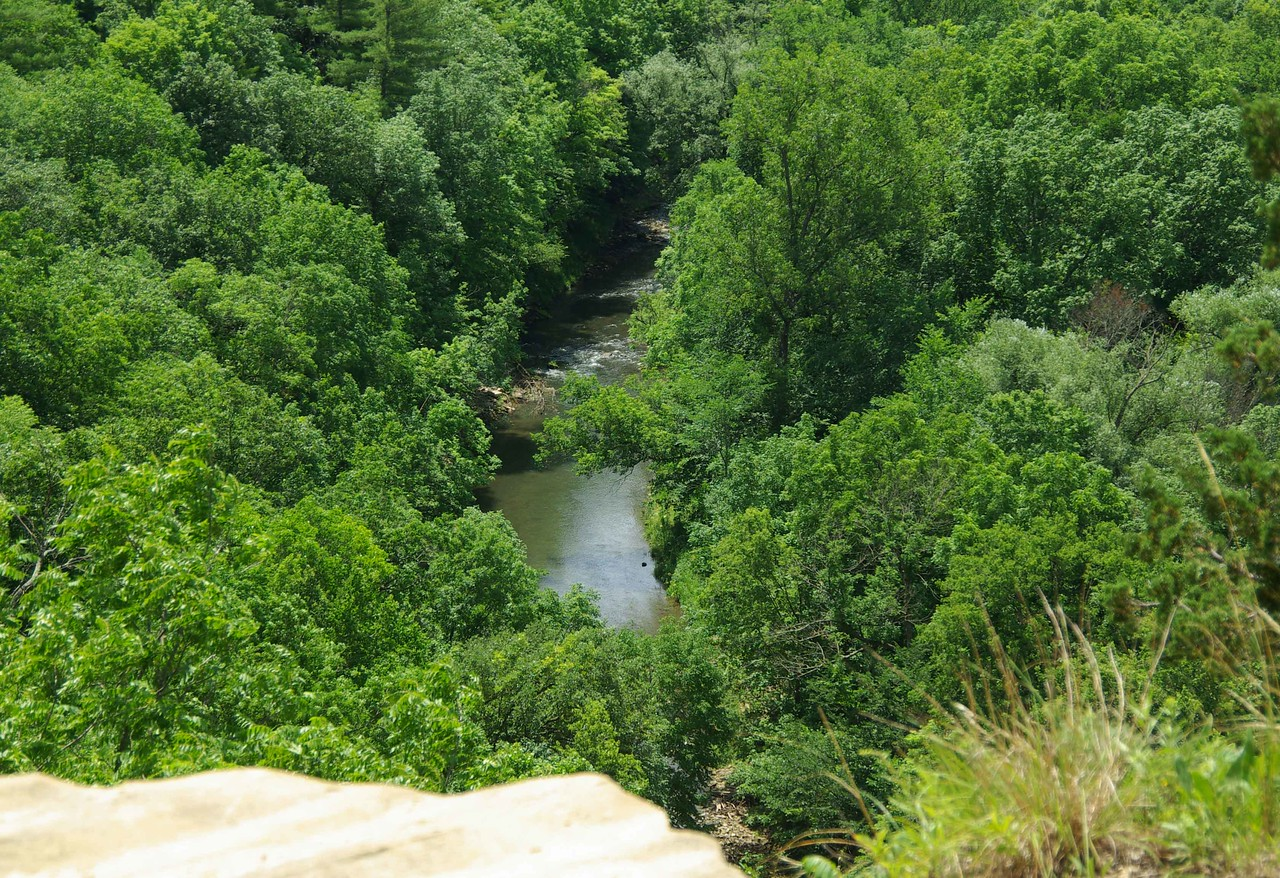 Nearly 50 kinds of mammals and 250 kinds of birds use the Whitewater River Valley during the course of a year. Wild turkeys are in the valley and bald eagles can be found year-around. In the spring, listen and look for the rare bird, the Louisiana waterthrush. Of Minnesota's rare animals and plants, 43 percent live in the Blufflands.
