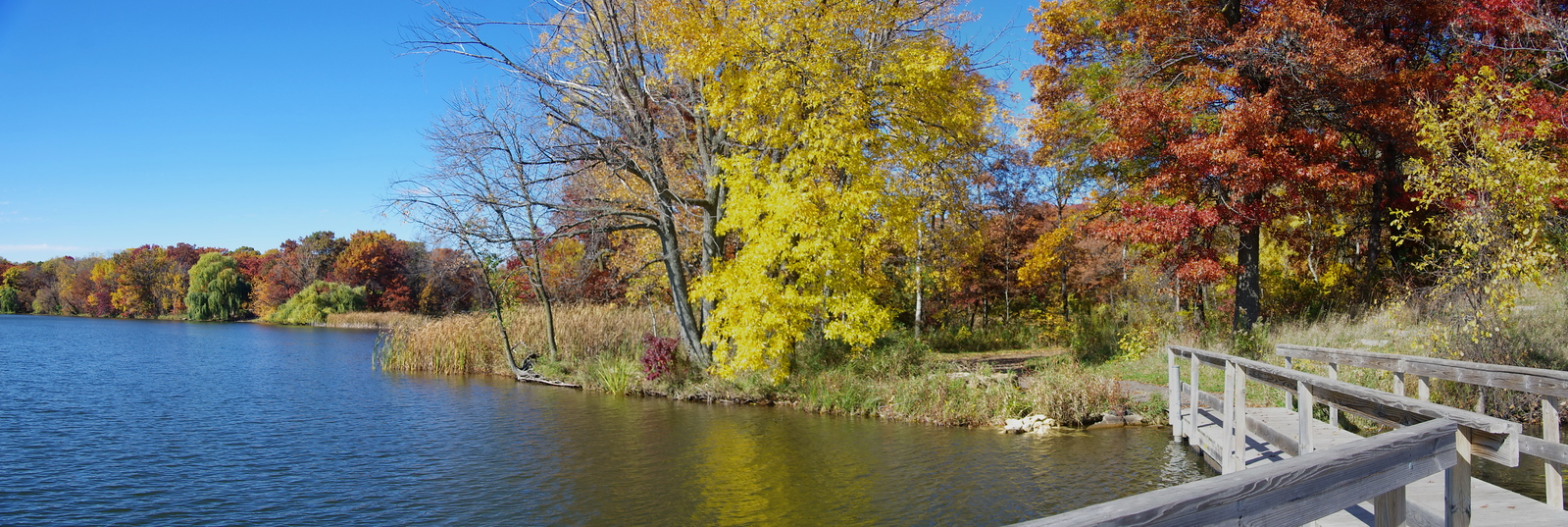 Joy Park - Maplewood