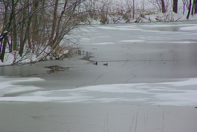 Will the ice be out by April 15th ?