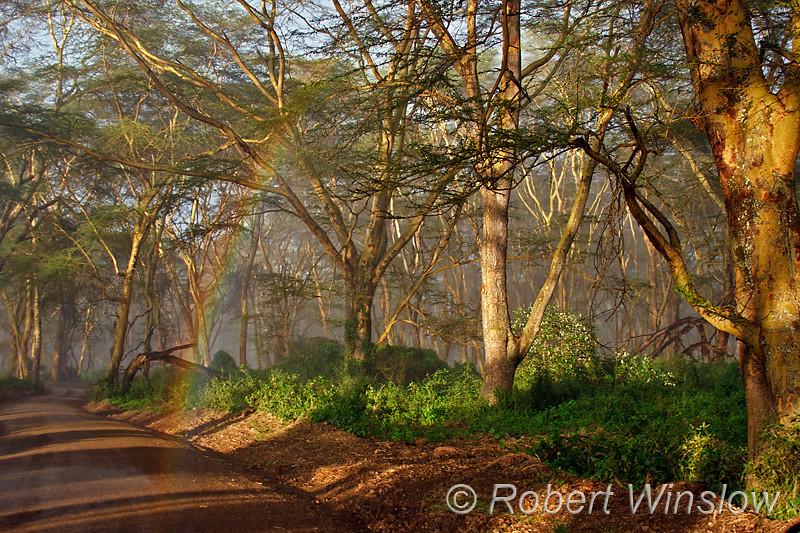 Rainbow along road, Lake Nakuru National Park, Kenya, Africa