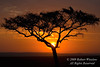 Sunrise, Acacia Tree, Masai Mara National Reserve, Kenya, Africa