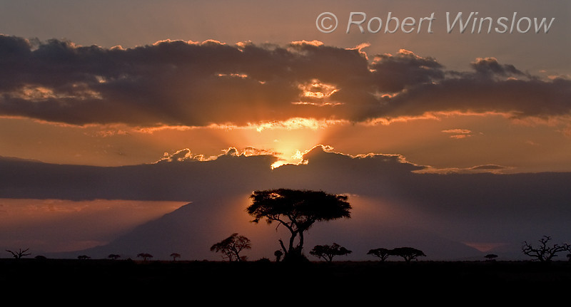 Sunset, Acacia Trees, Amboseli National Park, Kenya, Africa