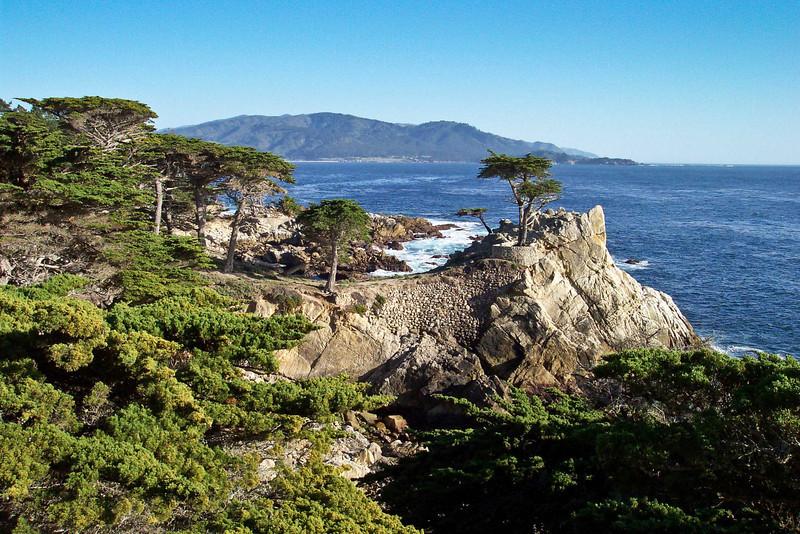 The Lone Cypress Tree, Pebble Beach, CA