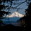 Title: Mount Hood<br /> Date: March 2010<br /> Portland OR - Mount Hood through the trees just outside of Portland.