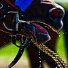 Title: Horse Gatorade Shot<br /> Date: August 2008<br /> Saratoga Springs NY - A horse being fed some water after a race, suddenly jerks up, and has spittle flies everywhere.