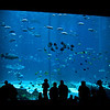 Title: Better than TV<br /> Date: June 2011<br /> Atlanta - The Georgia Aquarium