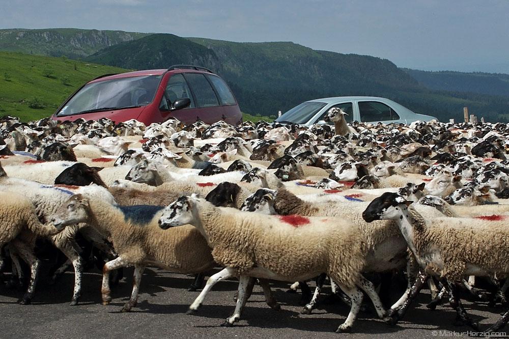 Traffic Jam @ Auvergne France 31May03