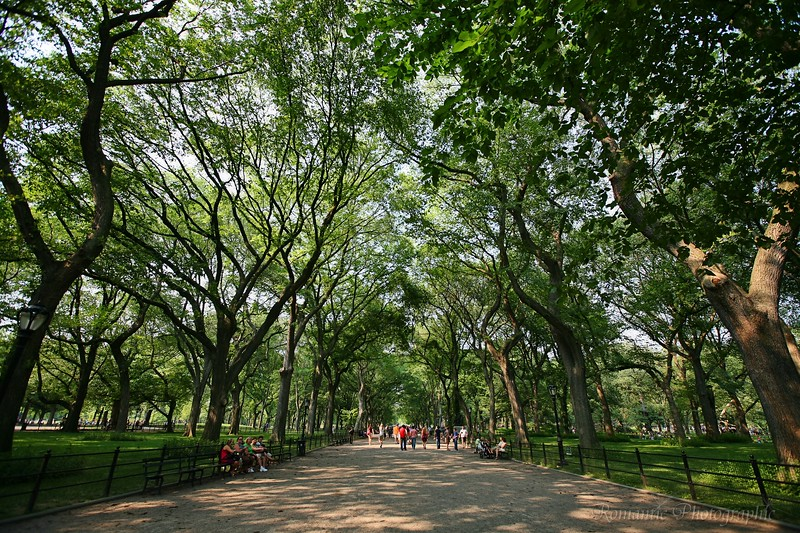New York's Central Park includes this gorgeous corridor of trees.