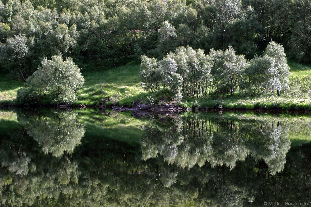 Trees at a calm lake @ Scotland 18Jul06