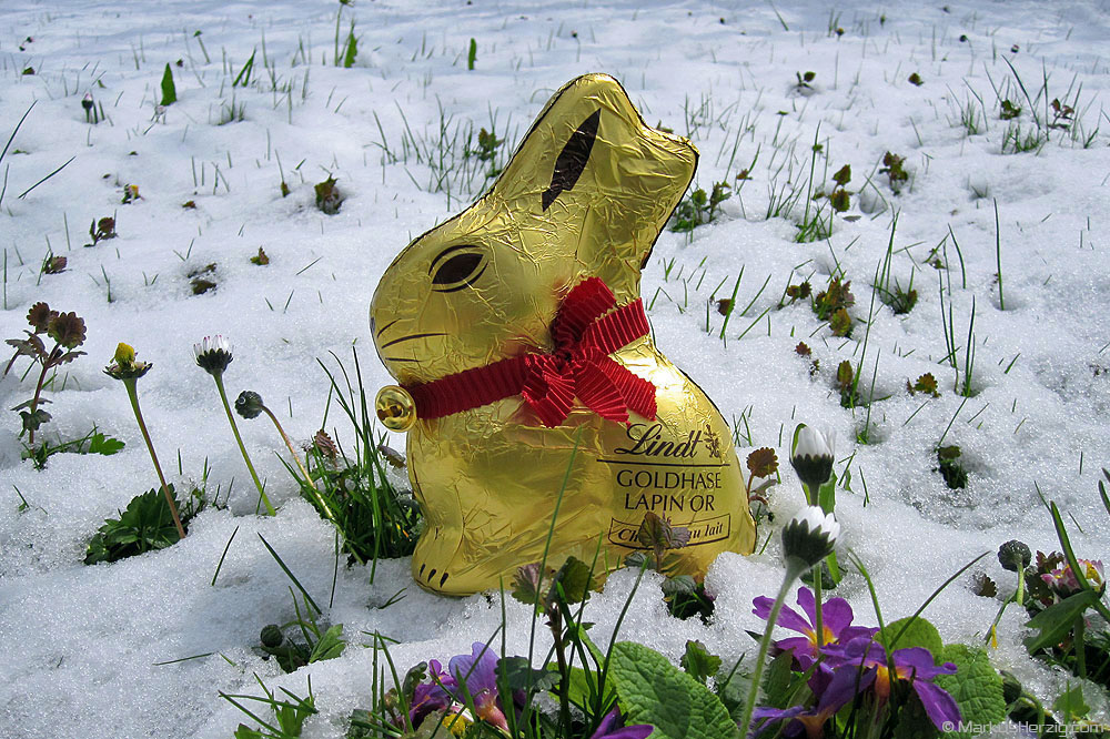 Easter bunny in the snow @ Berg Switzerland 8Apr12
