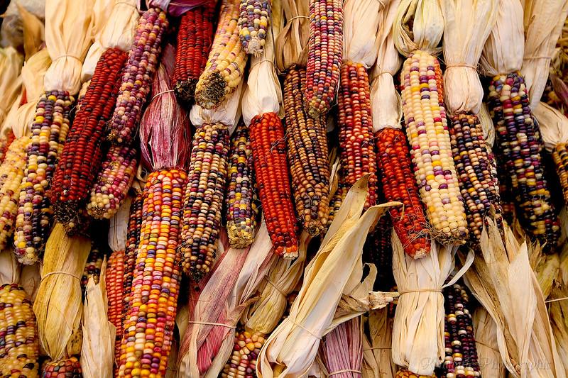 Montreal market harvest.