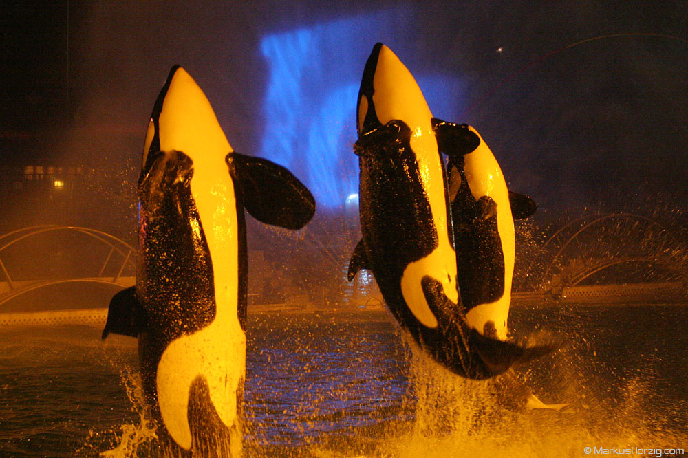 Marineland Orca Night Show @ Antibes France 26Mar05
