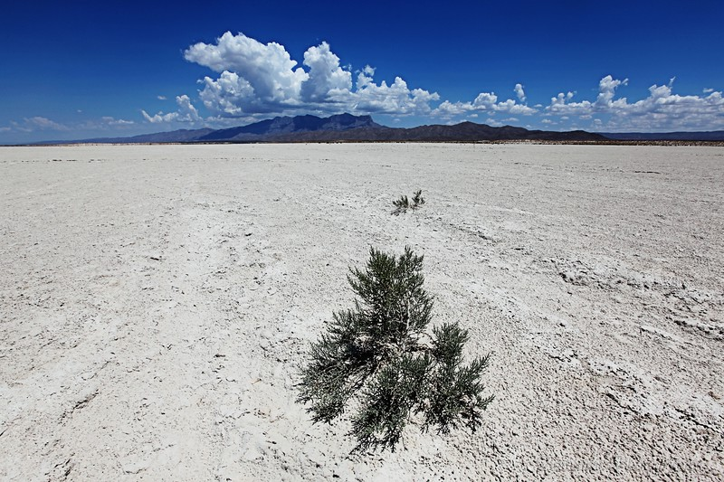 A plant struggles to survive on the alkali desert east of El Paso, Texas.