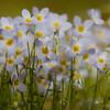 Wildflowers in Stowe, Vermont.