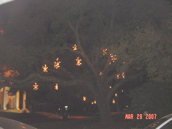 lighted tree on courthouse lawn