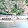 Wild Turkey in Stream - Award Trip from Allred's to Timeshare in Branson, MO  4-11 to 4-18, 1998