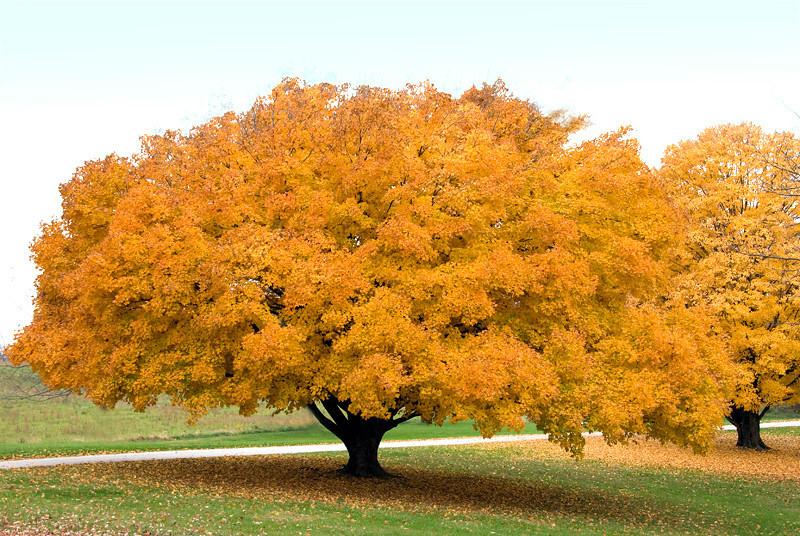 Fall in Arrowrock, MO