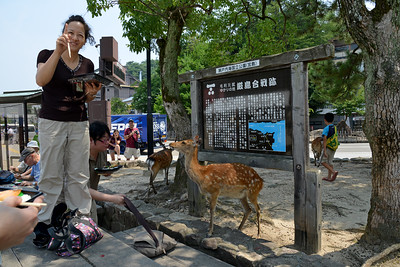 Free moving deers are happy to get into any food. Miyajima (宮島町) is a town located on the island of Itsukushima in Saeki District, Hiroshima Prefecture, Japan.  Hiroshima (広島市) is the capital of Hiroshima Prefecture, and the largest city in the Chūgoku region of western Honshu, which is the largest island of Japan. It is recongnized as the first city in history to be targeted by a nuclear weapon when the United States Army Air Forces (USAAF) dropped an atomic bomb on it at 8:15 a.m. on August 6, 1945, near the end of World War II. Hiroshima is situated on the Ōta River delta, on Hiroshima Bay, facing the Seto Inland Sea on its south side. The river's six channels divide Hiroshima into several islets.