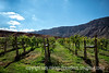 Vineyard next to the Colorado River near Moab