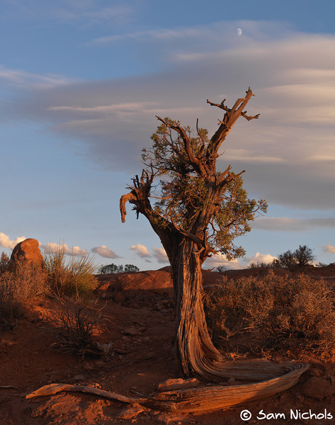 Lone tree in moab, just before the sun went down.