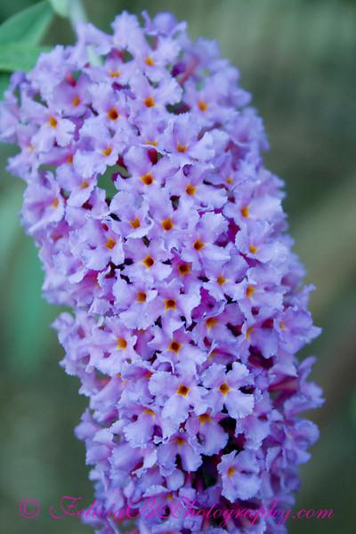 Purple Flowers 03