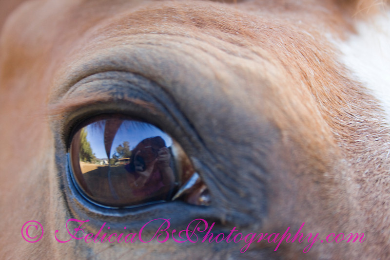 In A Horse's Eye
