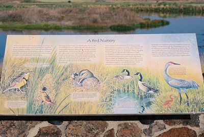 7/3/05 Modoc National Wildlife Refuge Viewing Area off Hwy 395 just south of Cty Rd. 56 in Alturas. Modoc County, CA