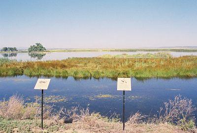 7/3/05 Modoc National Wildlife Refuge, Auto Tour. Modoc County, CA