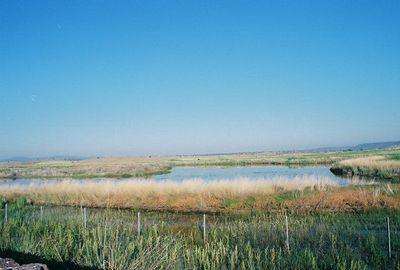 7/3/05 Modoc National Wildlife Refuge Viewing Area off Hwy 395 just south of Cty Rd. 56 in Alturas.