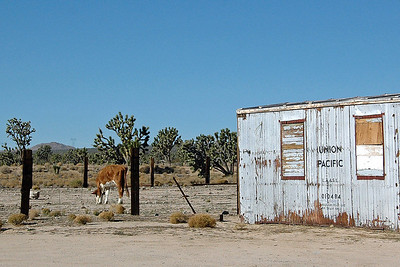 Mojave - Palm Springs - Salton Sea - Nov '11