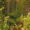Monarch Campground, Colorado