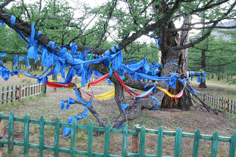 Zuun Salaa Mod, or the great Mother Tree, draped in Mongolian prayer flags.