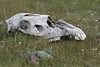 I never really got used to seeing skulls and other bones lying about in the fields.  Circle of life, I guess...