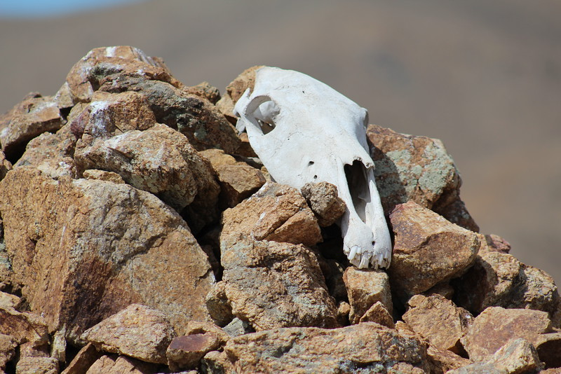 Horse skull atop a prayer mound.  Not creepy at all.