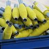 Man-made bananas.