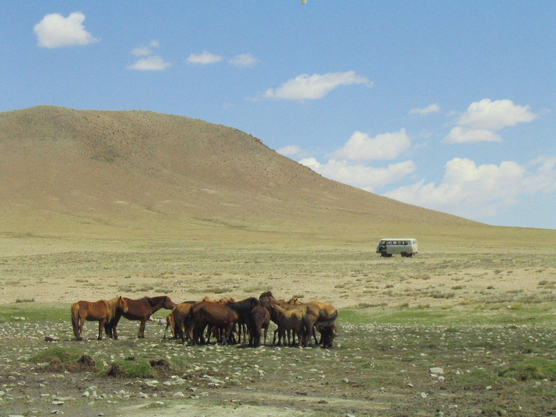 Wild horses and wild Russian van.