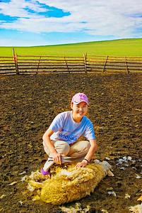 Shearing-Sheep-0082
