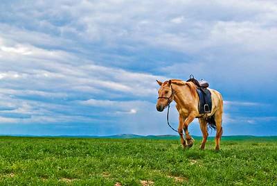 Hobbled-Horse-0266