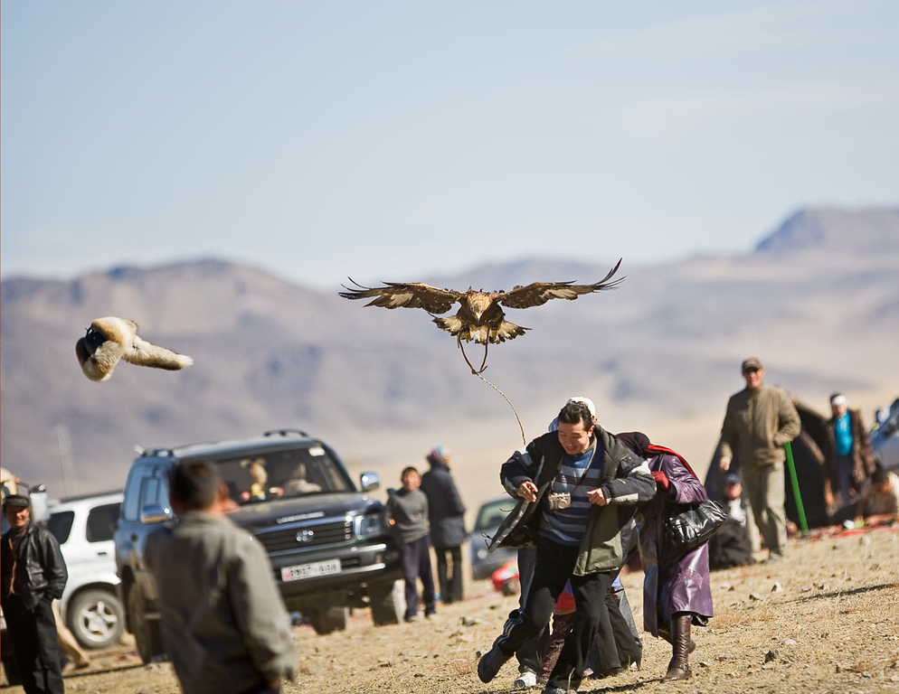 Another Golden Eagle attack...hat was thrown in the air to distract eagle from original target...a small girl.