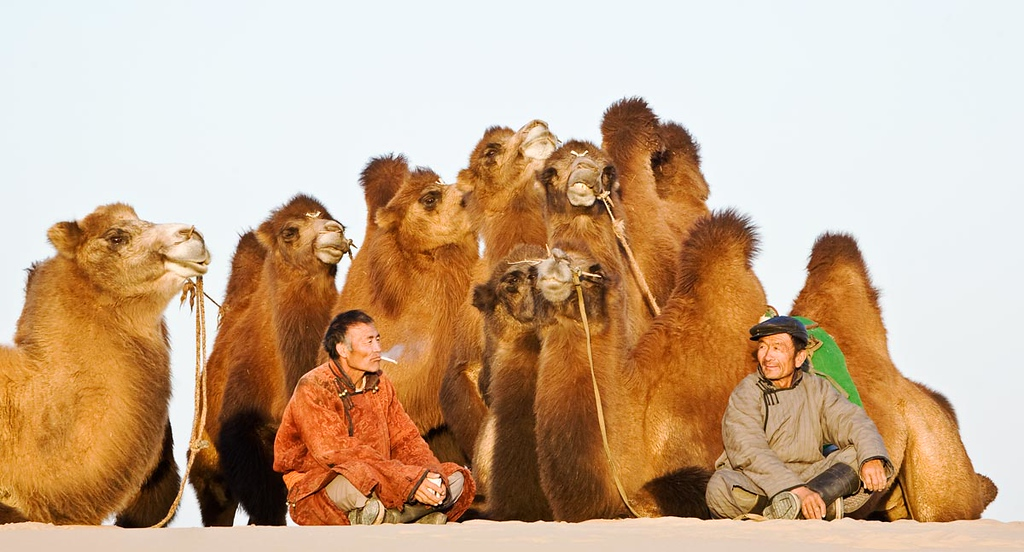 Can you spare a Camel?