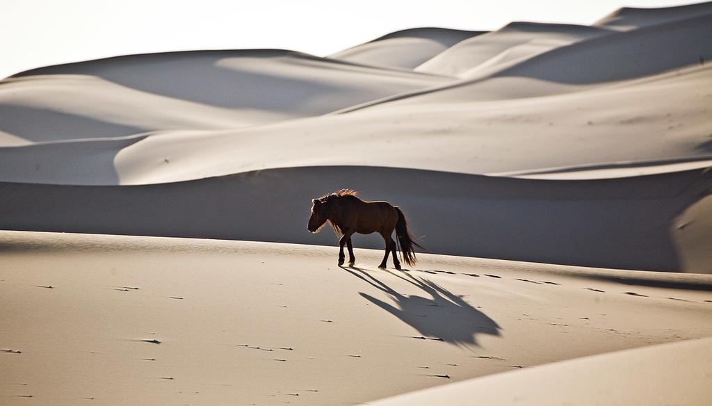 Head stallion leading the way.