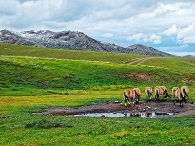 Hustai Nuuru National Park, Mongolia