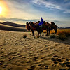 Camels and camel owner in the Gobi