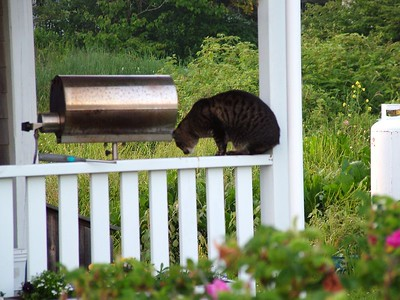 Cat on railing.