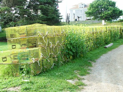 New wire lobster traps